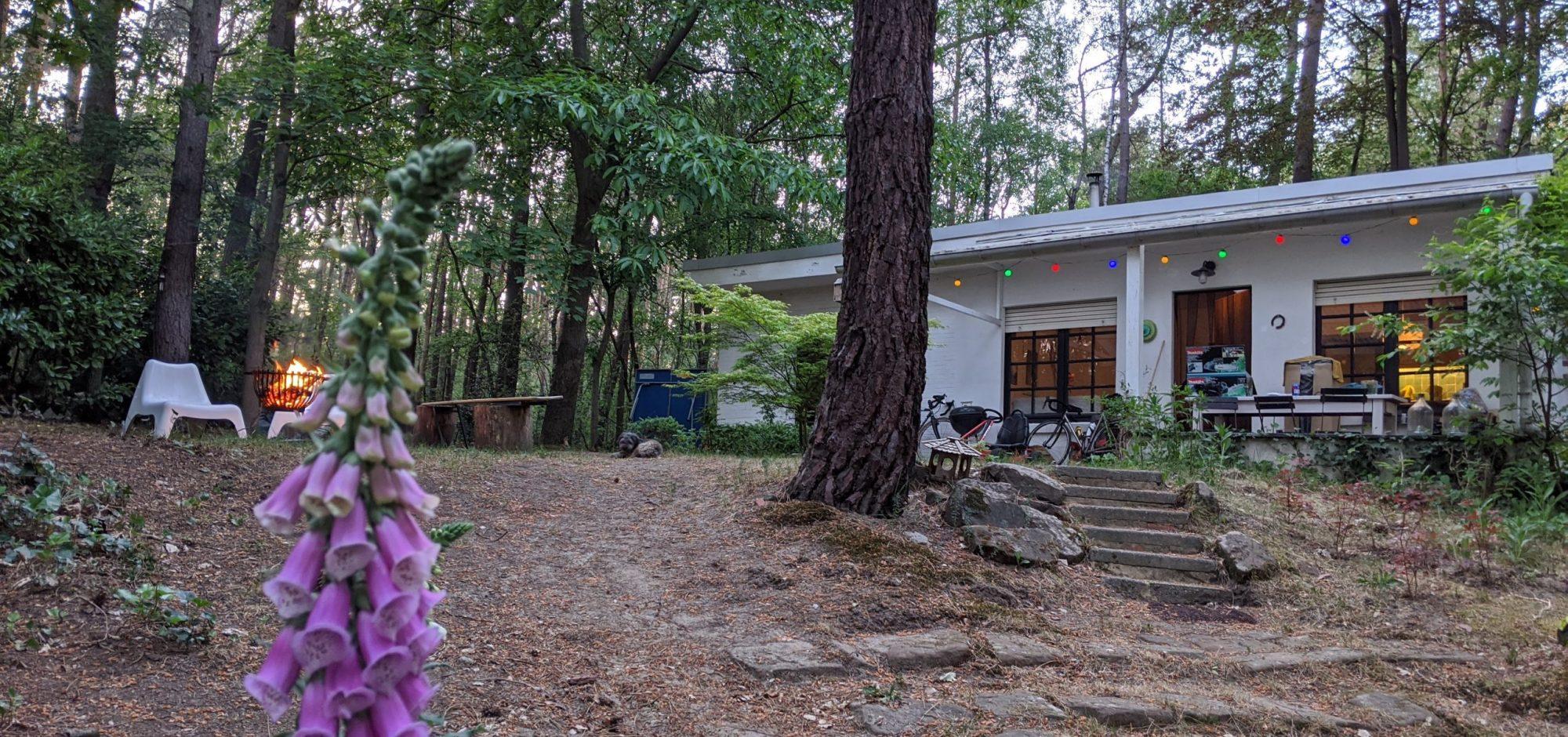 Natuurhuisje 'de bos' in Langdorp